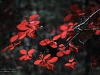 Осінь на Золотонощині