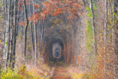 Autumn scenery in Tunnel of Love. Klevan, Ukraine