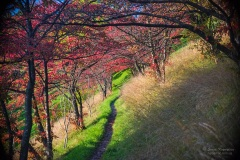 Picturesque pathway through group of trees with red leaves at sunny autumn day