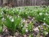 Квіти Холодного Яру