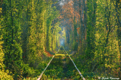 Spring morning in Tunnel of love. Klevan, Ukraine